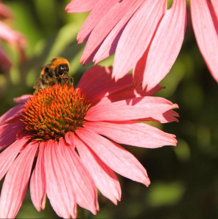 #Sweden #RoyalDjurgården #Bee