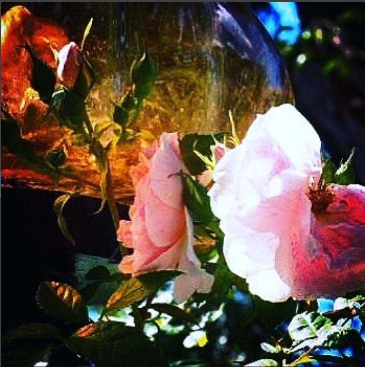 Pink roses from Blockhusudden, Djurgården #blockhusudden #djurgården #royaldjurgården #pinkroses #rose #roses