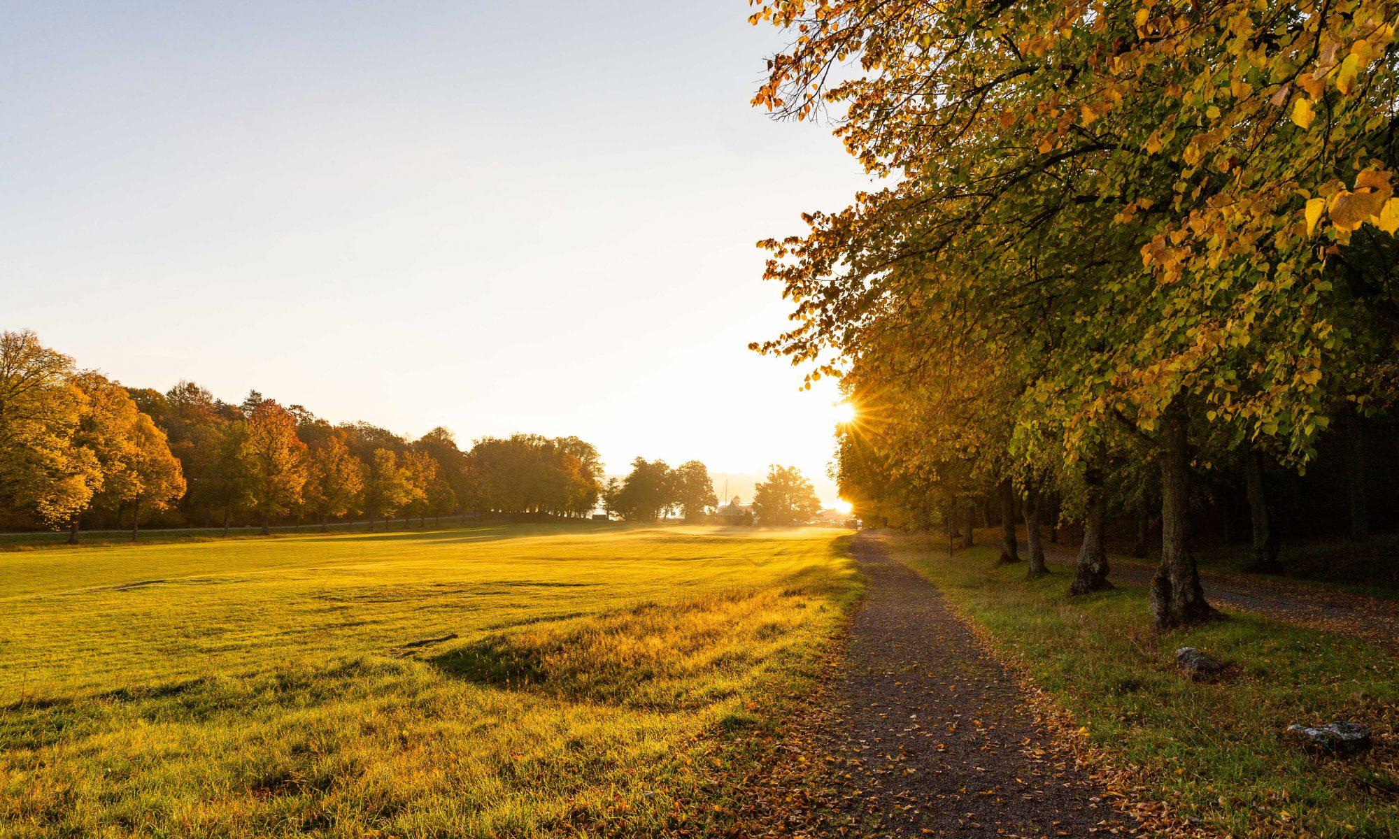 solen bryter fram mellan höstlöven