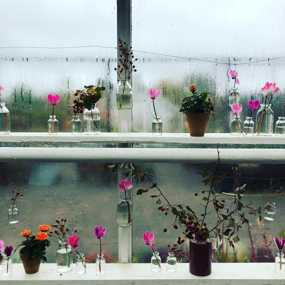 växter, växthus, blommor