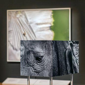 Ny utställning: Antropocen