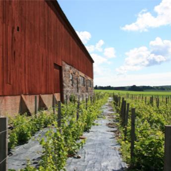 Vinmakarmiddag med Blaxsta vingård