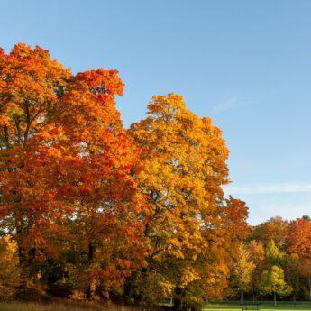 Experience Autumn at Djurgården